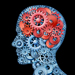 Blog Anne - Wij zijn ons brein